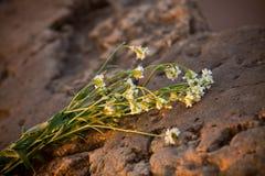 Λουλούδια στις πέτρες Στοκ Εικόνα