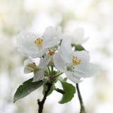 Λουλούδια στις πτώσεις βροχής Στοκ Εικόνες