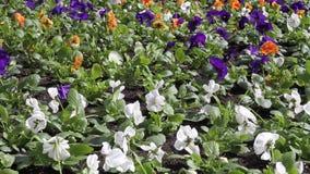 Λουλούδια στον αέρα απόθεμα βίντεο