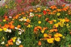 Λουλούδια στον κήπο Στοκ Εικόνες