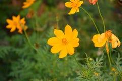 Λουλούδια στον κήπο Στοκ εικόνες με δικαίωμα ελεύθερης χρήσης