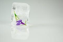 Λουλούδια στον κύβο πάγου Στοκ Εικόνα
