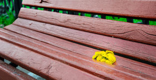 Λουλούδια στον πάγκο Στοκ Εικόνες