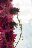 Λουλούδια στον πάγο Στοκ φωτογραφία με δικαίωμα ελεύθερης χρήσης
