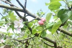 Λουλούδια στους οφθαλμούς στα δέντρα Στοκ φωτογραφία με δικαίωμα ελεύθερης χρήσης