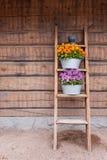 Λουλούδια στο άπαχο κρέας ραφιών σκαλών στον τοίχο Στοκ εικόνα με δικαίωμα ελεύθερης χρήσης