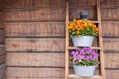 Λουλούδια στο άπαχο κρέας ραφιών σκαλών στον τοίχο Στοκ Φωτογραφίες