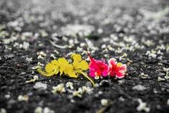 Λουλούδια στο έδαφος Στοκ Εικόνες