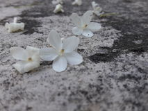 Λουλούδια στο έδαφος Στοκ φωτογραφία με δικαίωμα ελεύθερης χρήσης