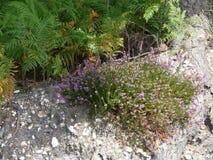 Λουλούδια στο αμμοχάλικο Στοκ Φωτογραφίες
