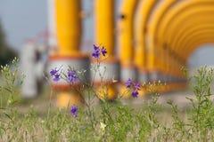 Λουλούδια στο βιομηχανικό υπόβαθρο Στοκ εικόνες με δικαίωμα ελεύθερης χρήσης