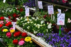 Λουλούδια στο βρεφικό σταθμό Στοκ Φωτογραφία