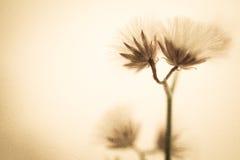 Λουλούδια στο εκλεκτής ποιότητας ύφος χρώματος στη σύσταση εγγράφου μουριών Στοκ Εικόνες