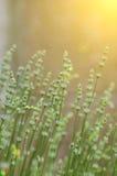 Λουλούδια στο εκλεκτής ποιότητας ύφος στοκ φωτογραφίες με δικαίωμα ελεύθερης χρήσης