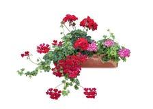 Λουλούδια στο κιβώτιο Στοκ φωτογραφία με δικαίωμα ελεύθερης χρήσης