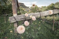 Λουλούδια στο κρασί Στοκ Εικόνες