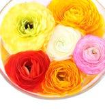 Λουλούδια στο κύπελλο Στοκ εικόνες με δικαίωμα ελεύθερης χρήσης