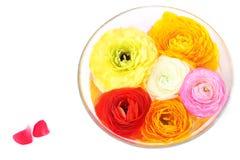 Λουλούδια στο κύπελλο Στοκ φωτογραφία με δικαίωμα ελεύθερης χρήσης