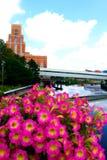 Λουλούδια στο μεγάλο ποταμό Στοκ εικόνα με δικαίωμα ελεύθερης χρήσης