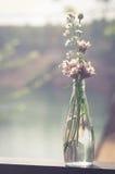 Λουλούδια στο μπουκάλι γυαλιού, τρύγος που φιλτράρεται Στοκ Εικόνες