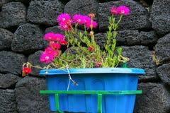 Λουλούδια στο μπλε δοχείο Στοκ φωτογραφία με δικαίωμα ελεύθερης χρήσης