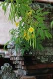 Λουλούδια στο ναό Mengi Στοκ Εικόνα