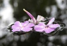 Λουλούδια στο νερό Στοκ Φωτογραφία