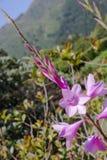 Λουλούδια στο νησί του Σάο Miguel Στοκ Φωτογραφίες