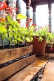 Λουλούδια στο ξύλινο πεζούλι Στοκ εικόνα με δικαίωμα ελεύθερης χρήσης