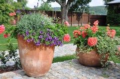 Λουλούδια στο δοχείο λουλουδιών Στοκ φωτογραφίες με δικαίωμα ελεύθερης χρήσης