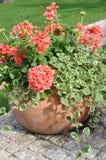 Λουλούδια στο δοχείο λουλουδιών Στοκ Εικόνα