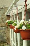 Λουλούδια στο δοχείο λουλουδιών στοκ εικόνα με δικαίωμα ελεύθερης χρήσης