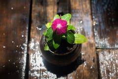 Λουλούδια στο δοχείο σε έναν υγρό πίνακα καφέδων μετά από τη βροχή Στοκ Εικόνες