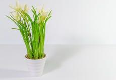 Λουλούδια στο δοχείο φυτών Στοκ φωτογραφία με δικαίωμα ελεύθερης χρήσης