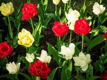 Λουλούδια στο πάρκο Στοκ φωτογραφία με δικαίωμα ελεύθερης χρήσης