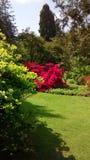 Λουλούδια στο πάρκο Στοκ φωτογραφίες με δικαίωμα ελεύθερης χρήσης