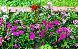 Λουλούδια στο πάρκο Στοκ Εικόνα