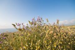 Λουλούδια στο πεδίο στοκ φωτογραφία με δικαίωμα ελεύθερης χρήσης