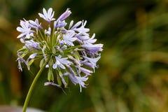 Λουλούδια στο πεδίο Στοκ φωτογραφίες με δικαίωμα ελεύθερης χρήσης