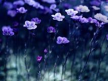 Λουλούδια στο σεληνόφωτο Στοκ εικόνες με δικαίωμα ελεύθερης χρήσης