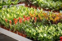 Λουλούδια στο σύγχρονο θερμοκήπιο - houseplants Στοκ Εικόνες