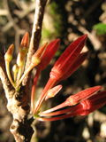 Λουλούδια στο τροπικό δάσος Στοκ Εικόνα