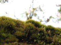 Λουλούδια στο τροπικό δάσος Στοκ εικόνες με δικαίωμα ελεύθερης χρήσης