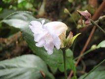 Λουλούδια στο τροπικό δάσος Στοκ Φωτογραφίες