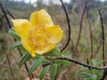Λουλούδια στο τροπικό δάσος Στοκ Φωτογραφία