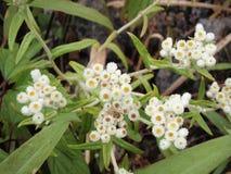 Λουλούδια στο τροπικό δάσος Στοκ φωτογραφίες με δικαίωμα ελεύθερης χρήσης