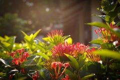 Λουλούδια στο φως του ήλιου Στοκ Εικόνες