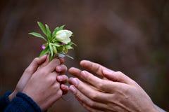 Λουλούδια στο δώρο, εννοιολογικό Στοκ εικόνα με δικαίωμα ελεύθερης χρήσης
