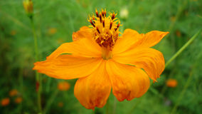 Λουλούδια στο keeriganga Ινδία Στοκ Φωτογραφίες