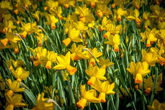 Λουλούδια στο Keukenhof στοκ φωτογραφία